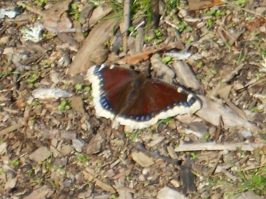 Butterfly in Lithia Park