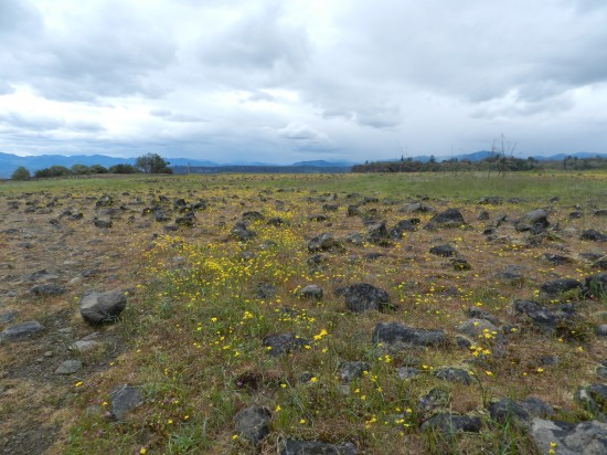 Wildflowers and the rocky terrain of the plateau. I worked hard not to keep my footing