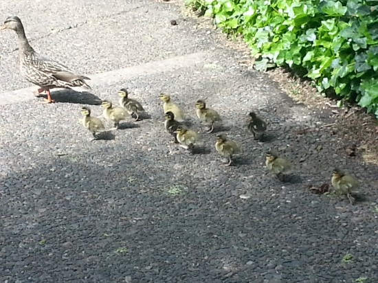 Ducks in a row!