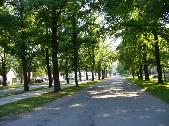 Beautiful tree-lined streets - we enjoyed so many towns like this