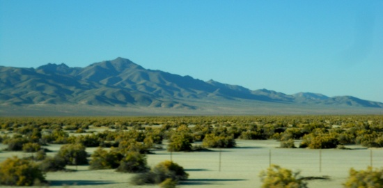 The tree of Utah - middle of nowhere - salt flats