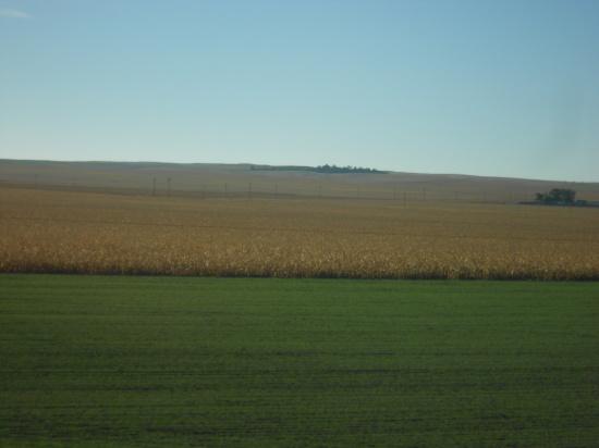 Nebraska corn field