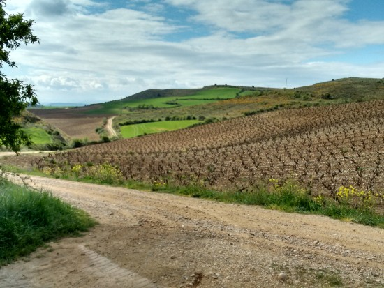 walking from Los Arcos to Viana.