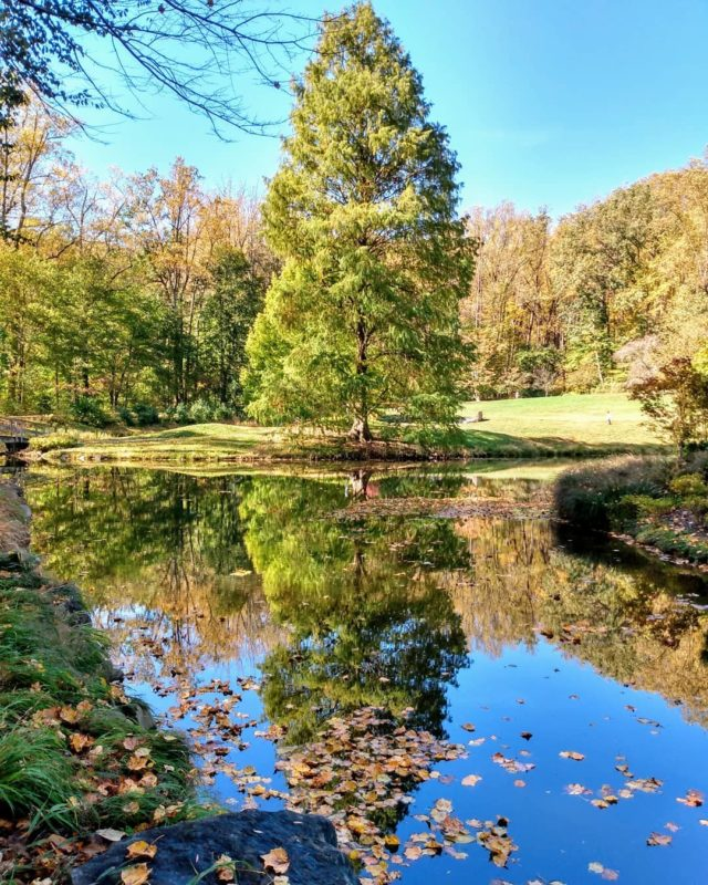Fall reflections #brooksidegardens #visitmaryland #photography #naturephotography #garden #reflection #travelblogger #pond #tree