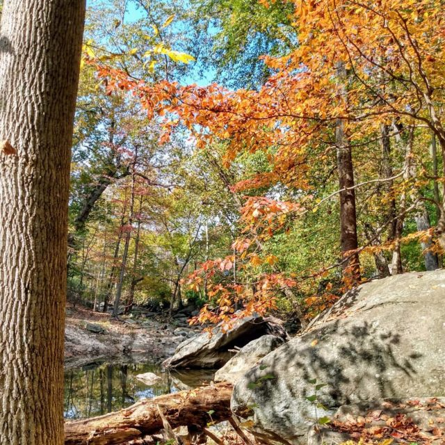 Favorite time of year! #fall #leafpeeping #autumn #takeahike #trees #picture #photography #naturephotography #naturelover #travelphotography