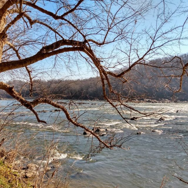 Hiking alongside the Potomac River, Maryland. #billygoattrail #gooutside #potomacriver #postcardsfromtheworld #naturephotography #picture #travel #travelphotography #travelblogger