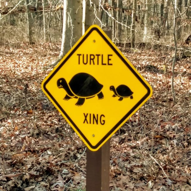 As seen on the road to the Patuxent National Wildlife Refuge. We never did see any turtles 🐢 #funnysigns #signage #turtle #roadsign #picture #postcardsfromtheworld #photography